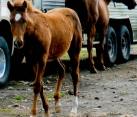 2010 Filly