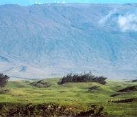 Mauna Kea Riding