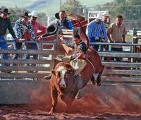 Pa'akaula bull riding